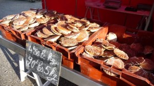 Coquilles St Jacques Normandie